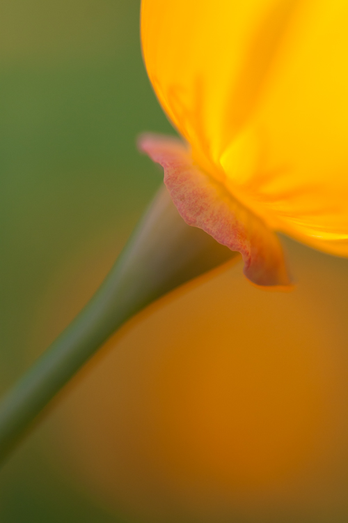 macro photography abstract yellow - Post-Processing Workflow