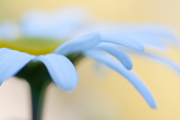 daisy abstract macro photography bokeh - How to Choose the Perfect Macro Lens