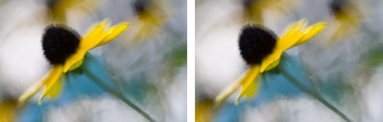 macro photography flower yellow abstract - Post-Processing Workflow