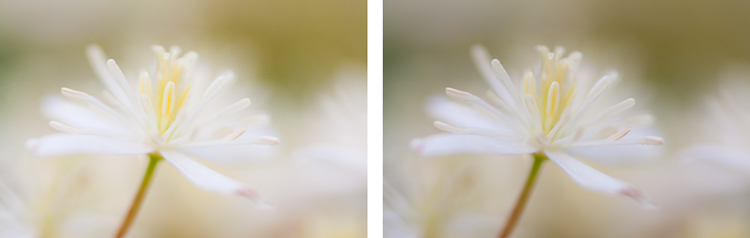 macro photography flower abstract - Post-Processing Workflow