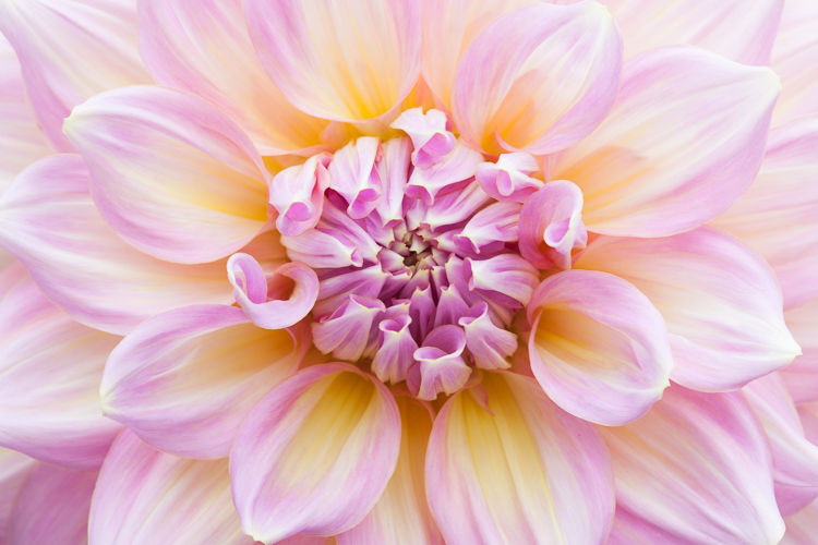 dahlia macro photography flower - 5 Camera Settings That All Macro Photographers Should Know