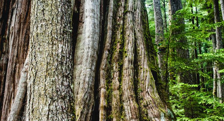 Bark details - patterns in nature