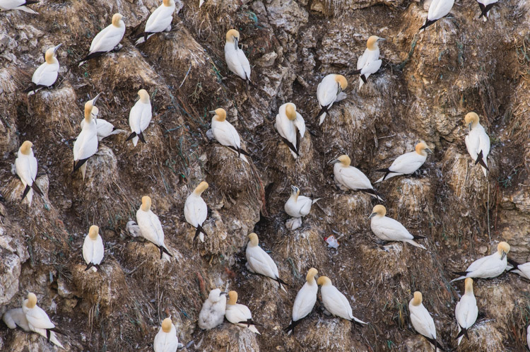 Bird nest pattern - Tips for Photographing Patterns in Nature