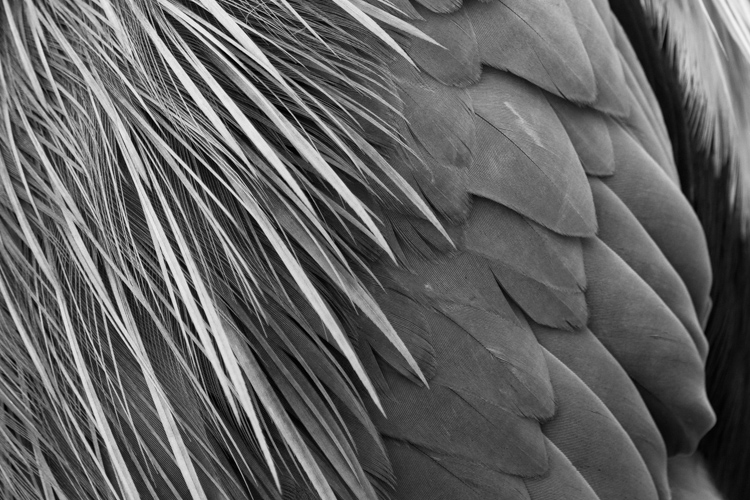https://i0.wp.com/digital-photography-school.com/wp-content/uploads/2018/04/feather-patterns.jpg?resize=750%2C500&ssl=1