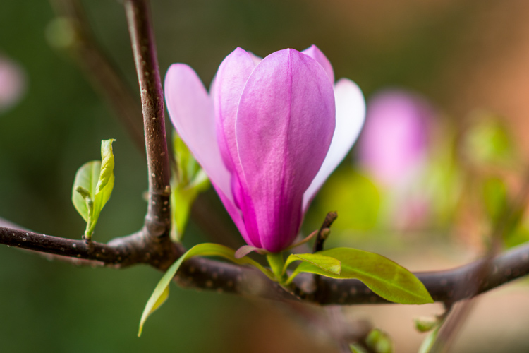 Optical Versus Electronic Viewfinders - pink flower