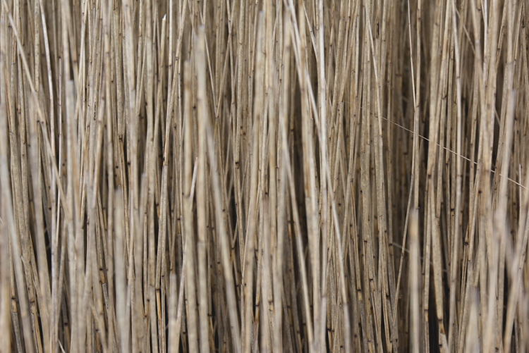 Reed patterns in nature