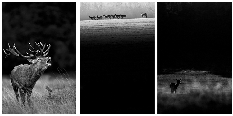 Shooting a set of images (3 images of deer)