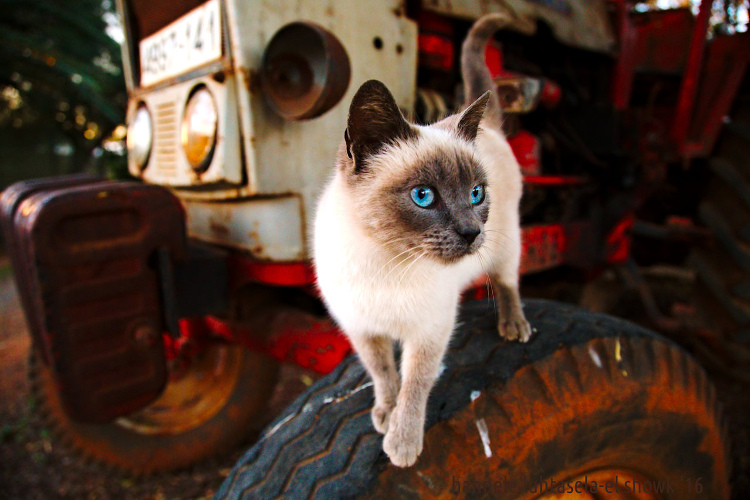 How to Use Conceptual Contrast in Photography - cat on a tire