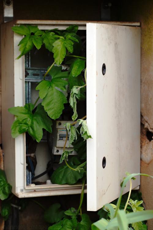 如何在摄影中使用概念对比 - 在电箱中植物
