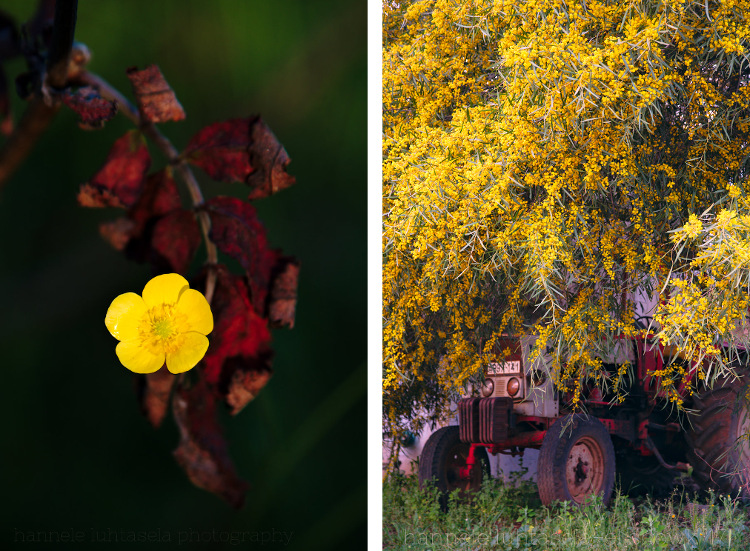 How to Use Conceptual Contrast in Photography - red and yellow subjects