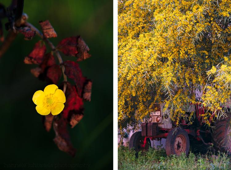 如何在摄影中使用概念对比 - 红色和黄色主题