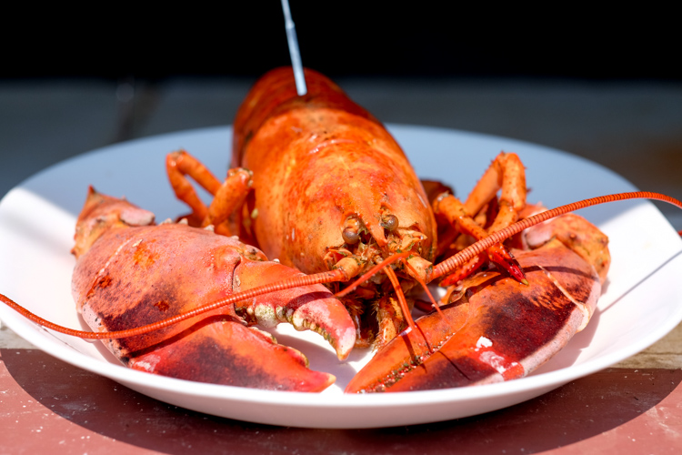 A lobster on a plate. How to Photograph Your Family Vacation