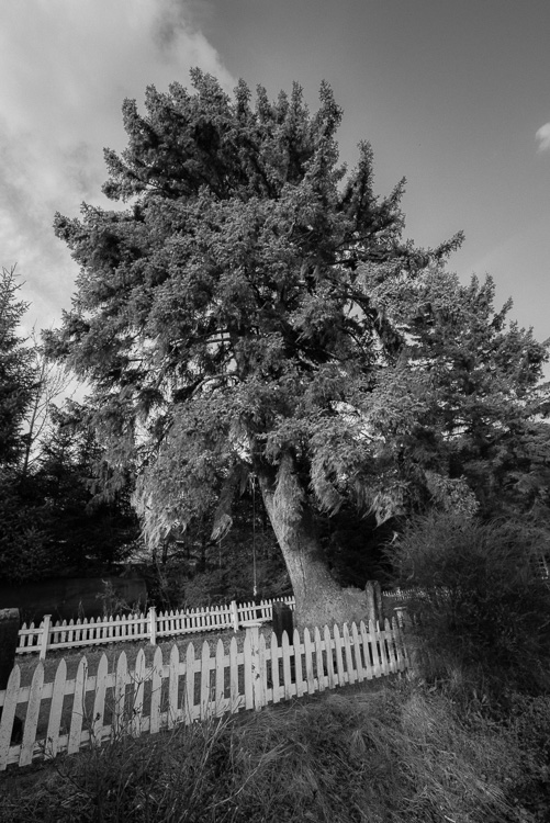 Review of the Sigma 14-24mm F2.8 Art Lens - b/w photo of a tree