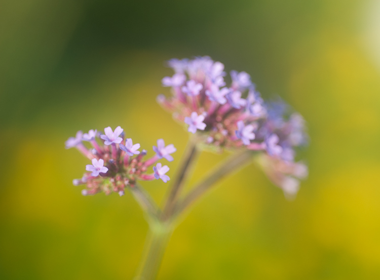 flower photography macro evening light - A Beginner's Guide to Photographing Flowers