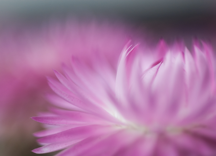 flower photography macro abstract - A Beginner's Guide to Photographing Flowers