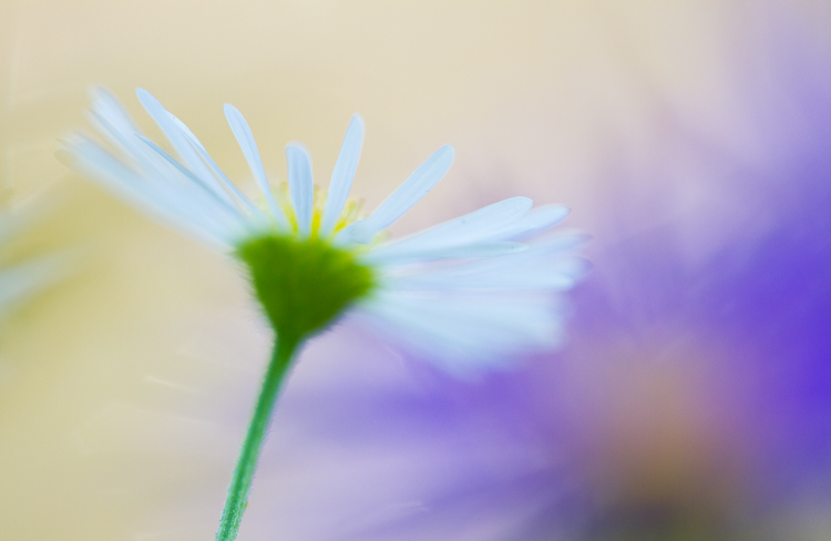 macro photography flower colorful abstract - A Beginner's Guide to Photographing Flowers