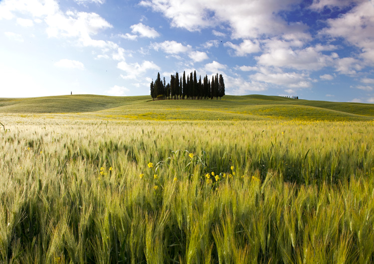 5 Landscape Photography Mistakes That Keep Your Images From Standing Out - field of tall grasses