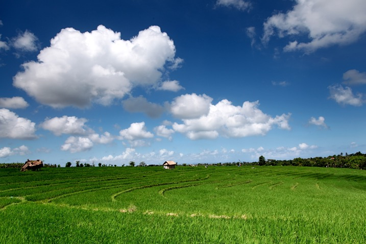 5 Camera Filters That Can Enhance Your Photography - blue sky and a green field