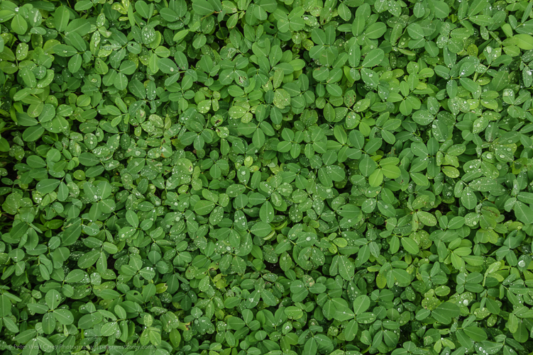 Image: Ground cover – Costa Rica ISO 80, f/5.6, 1/40th.