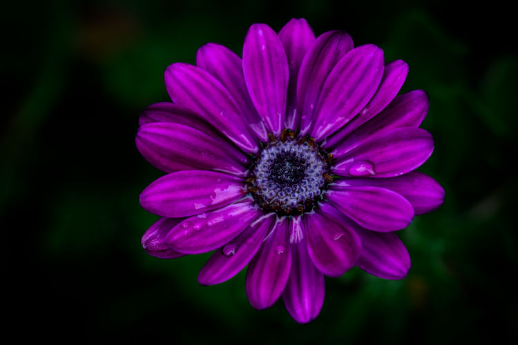 purple flower - How Much is an Image Worth? Tips for Pricing Your Photography