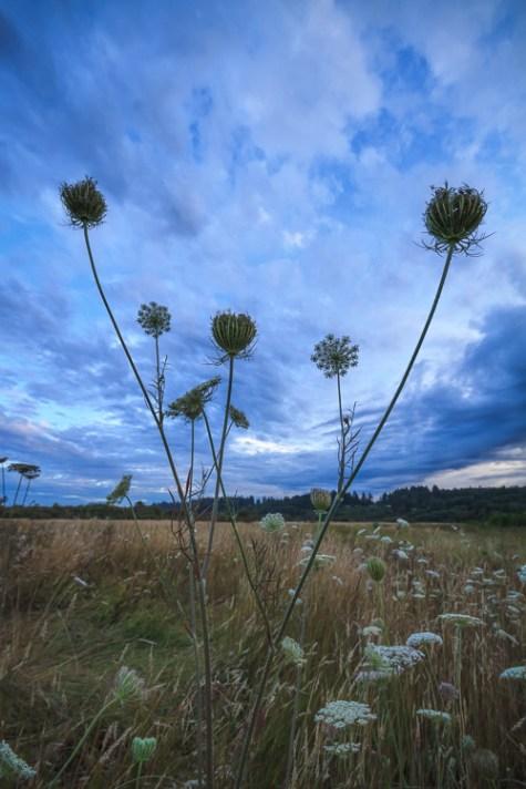暴风花 -  8种创造更多戏剧性花卉照片的方法