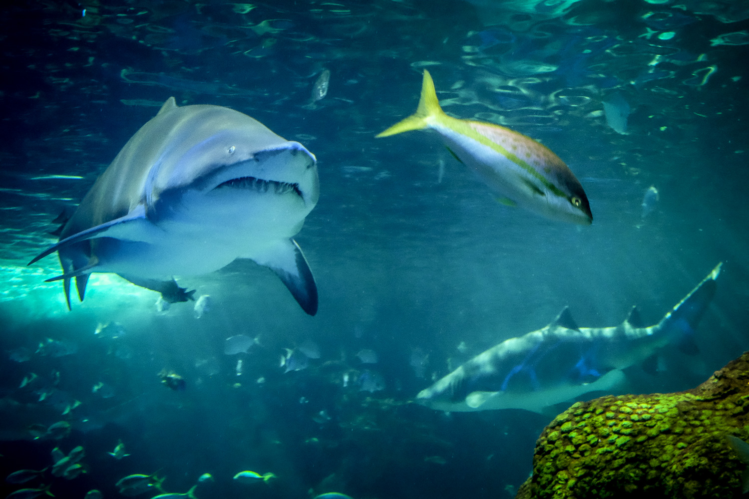 Photo of a shark chasing a fish. How to Take Clear and Creative Photos at Aquariums