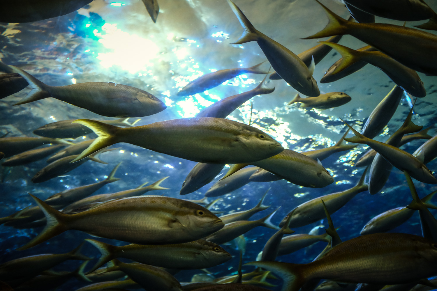 Close up of a backlit school of fish. How to Take Clear and Creative Photos at Aquariums
