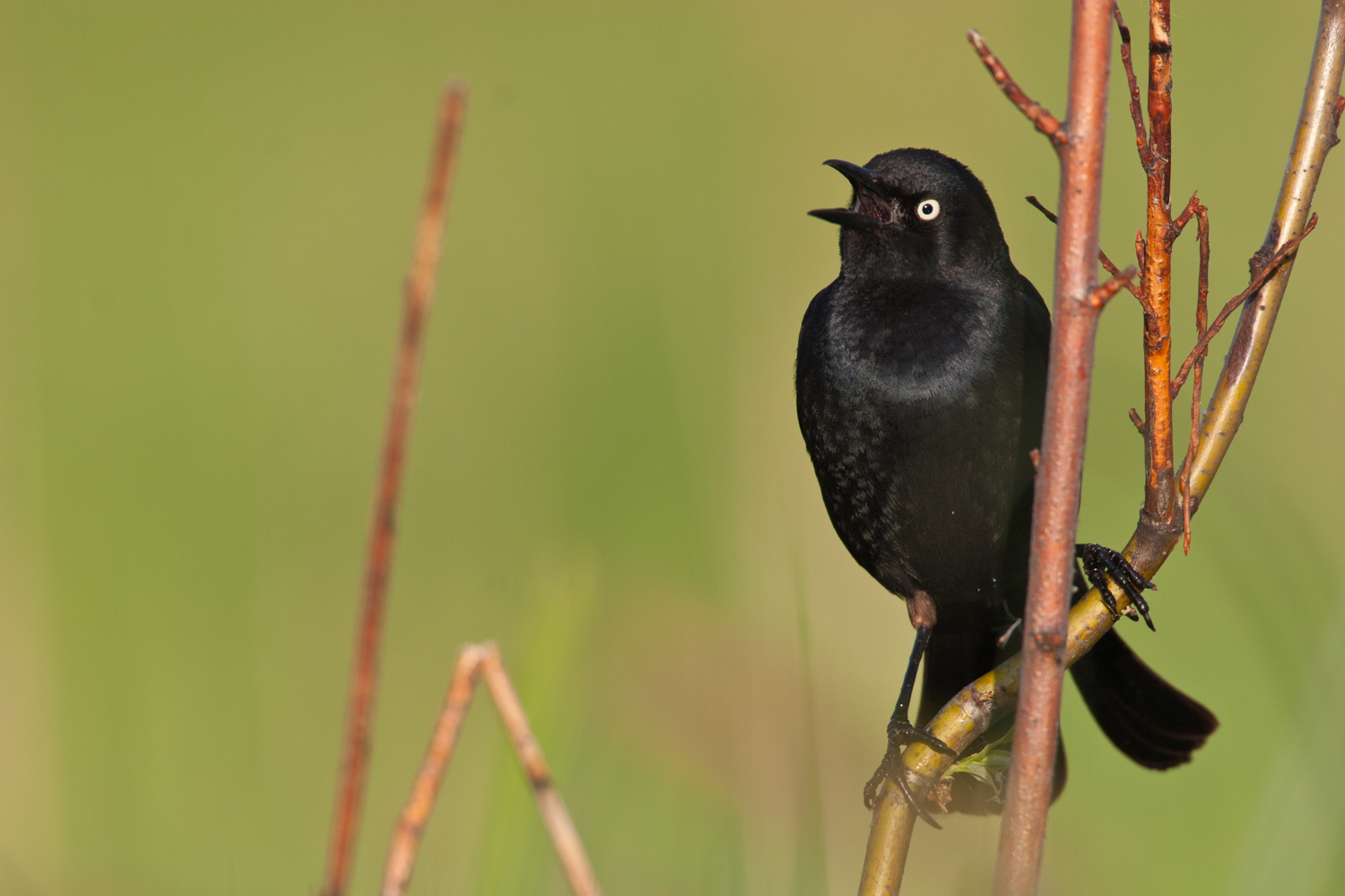 A Guide to Photographing Birds and Wildlife in a Wetland Area - bird photo