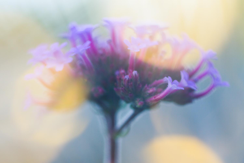 creative macro photography fairy lights flower bokeh