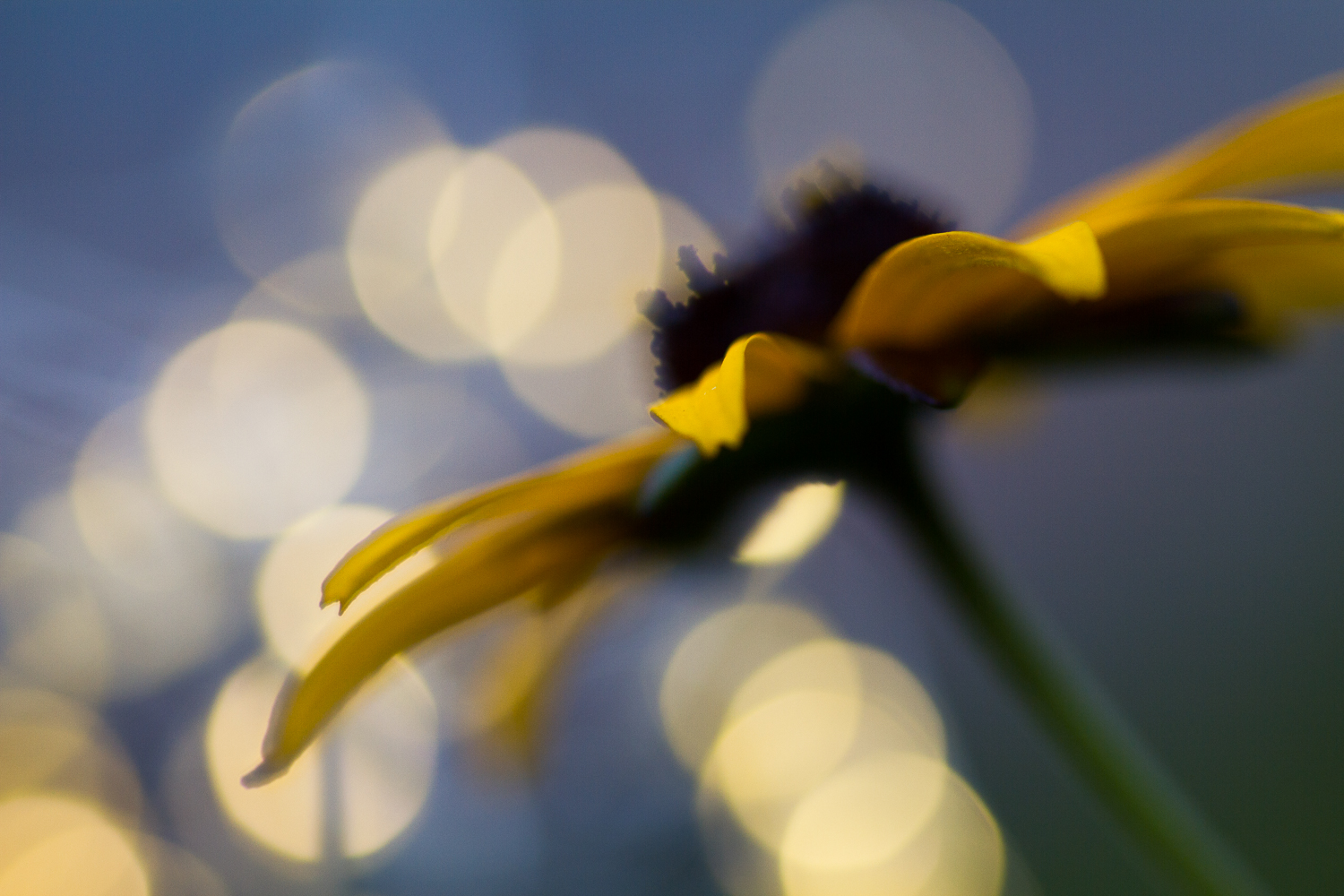 fairy light macro photography flower bokeh