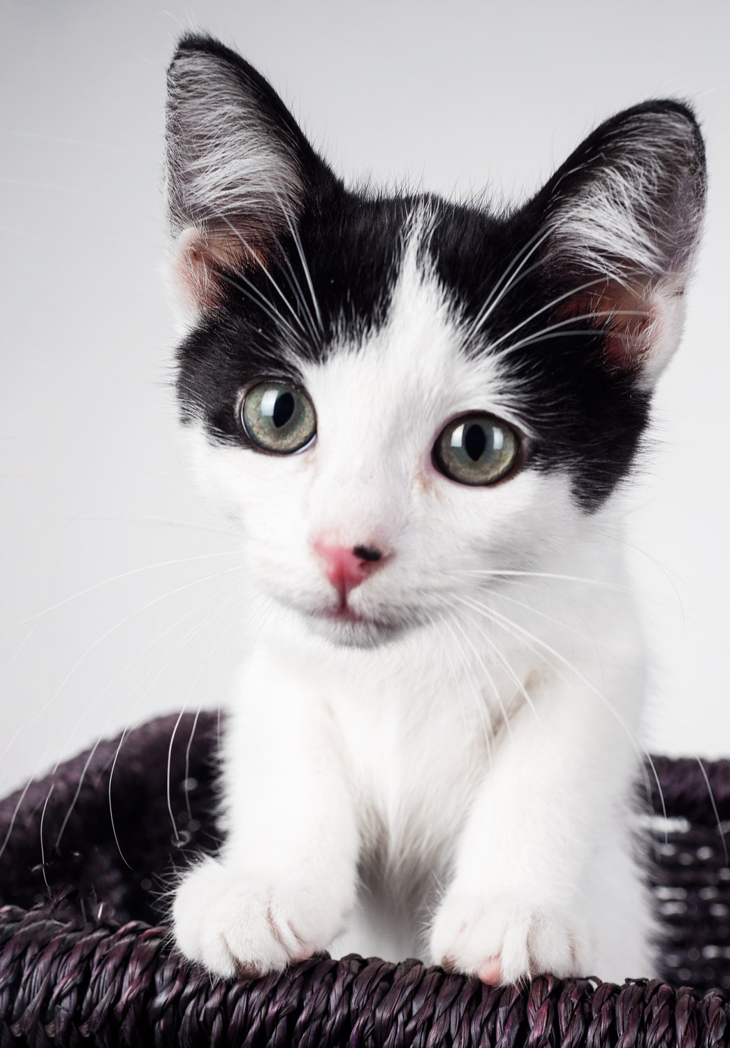 Tips for Great Lighting for Pet Photography - black and white kitten