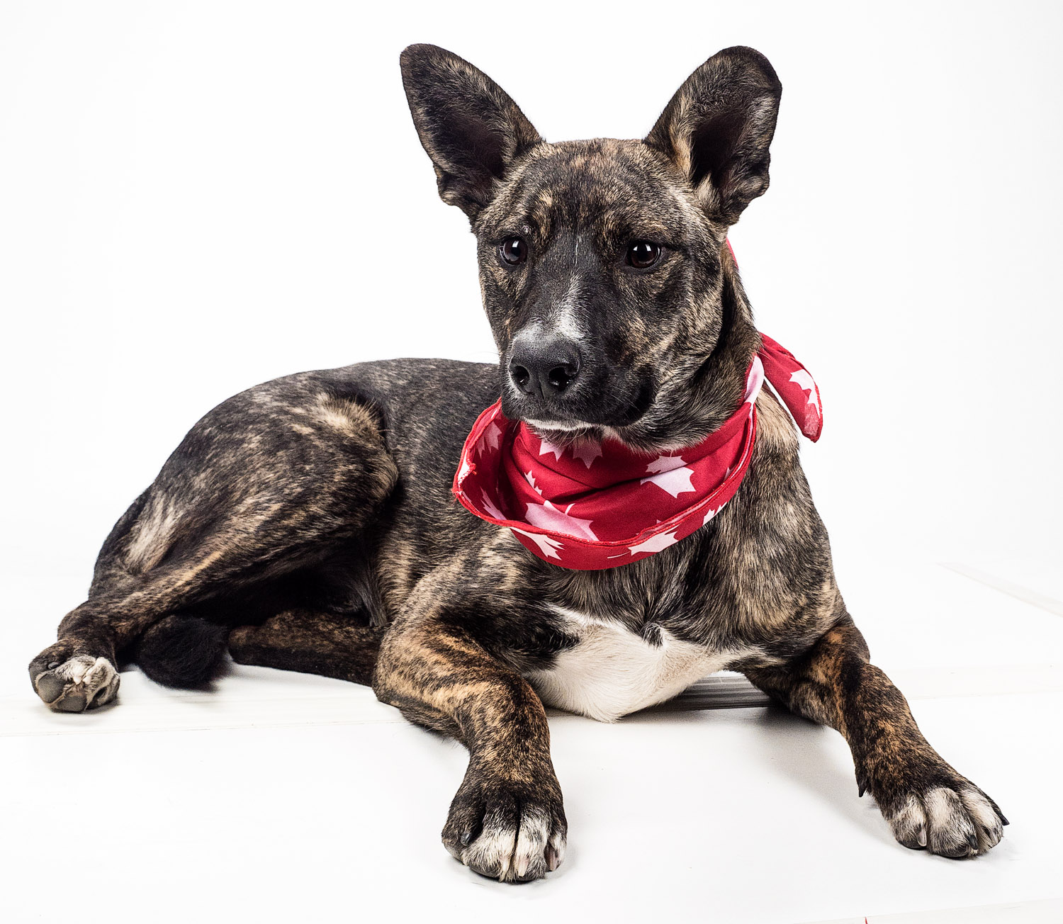 dog with red bandana - Tips for Great Lighting for Pet Photography