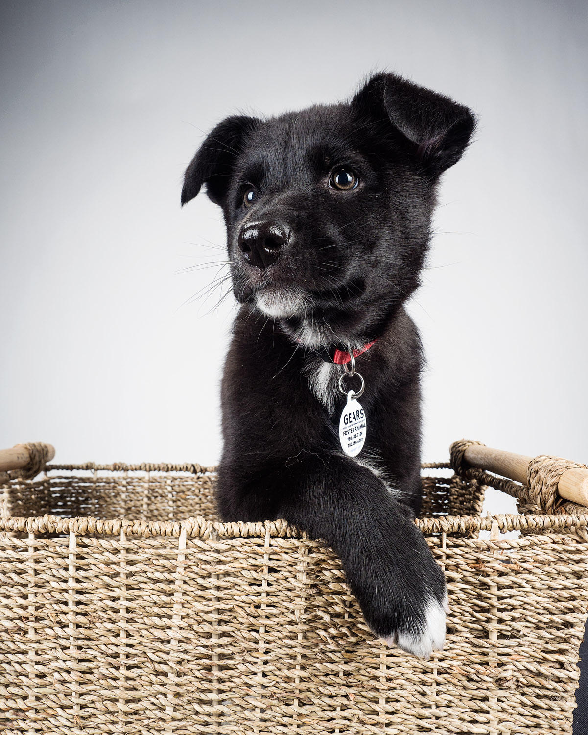 dog in a basket - Tips for Great Lighting for Pet Photography