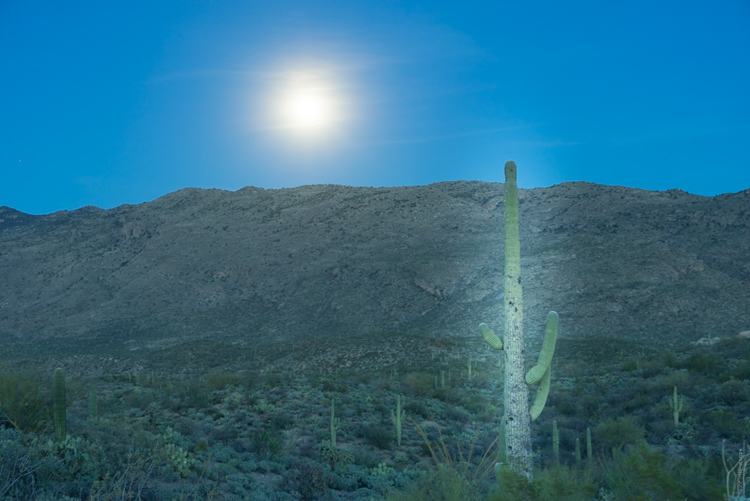 saguaro cactus bad edit - Editing Gently: 3 Tips for Processing Realistic Landscape Photos