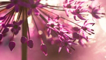 macro flower bokeh photography