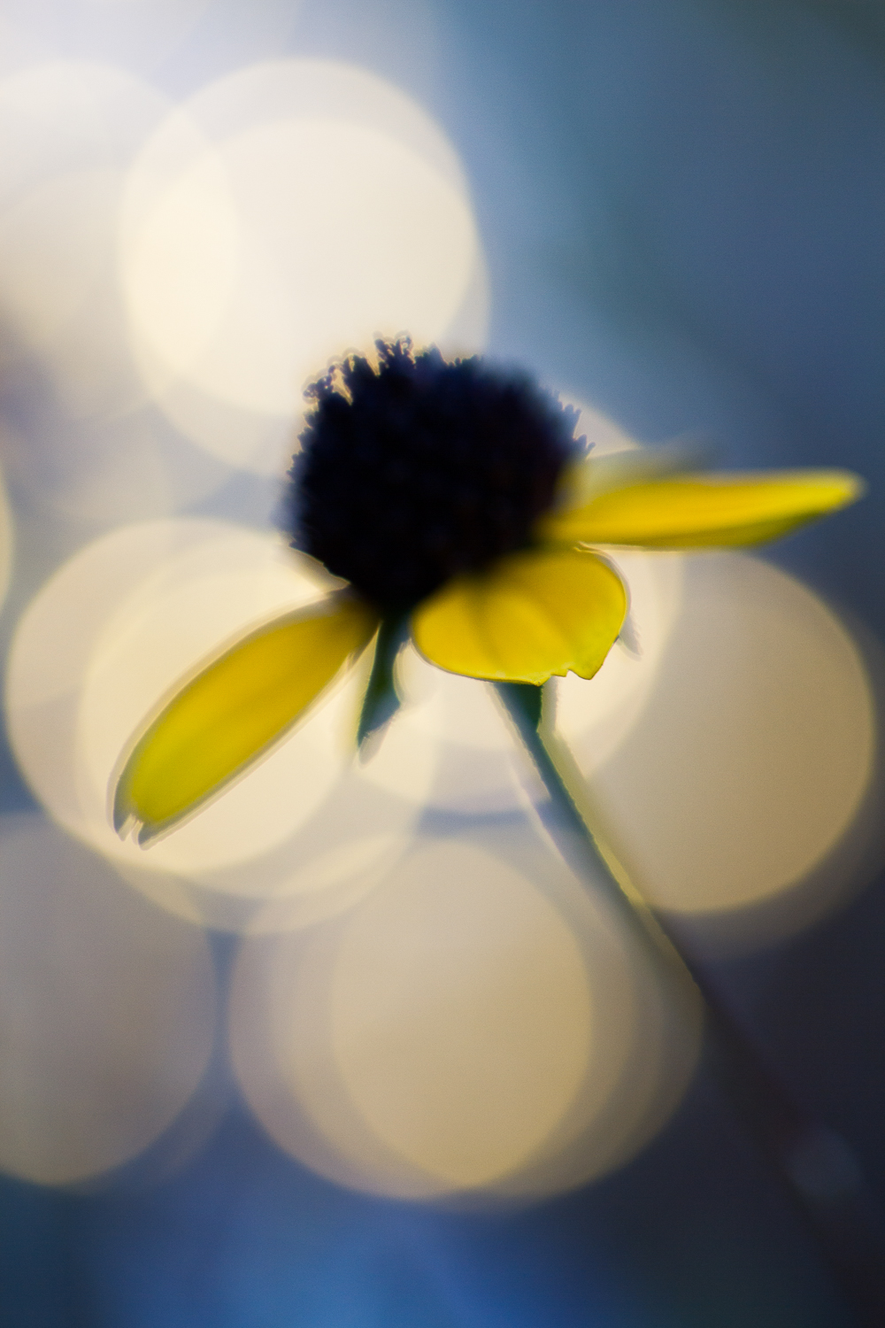 macro flower bokeh photography yellow