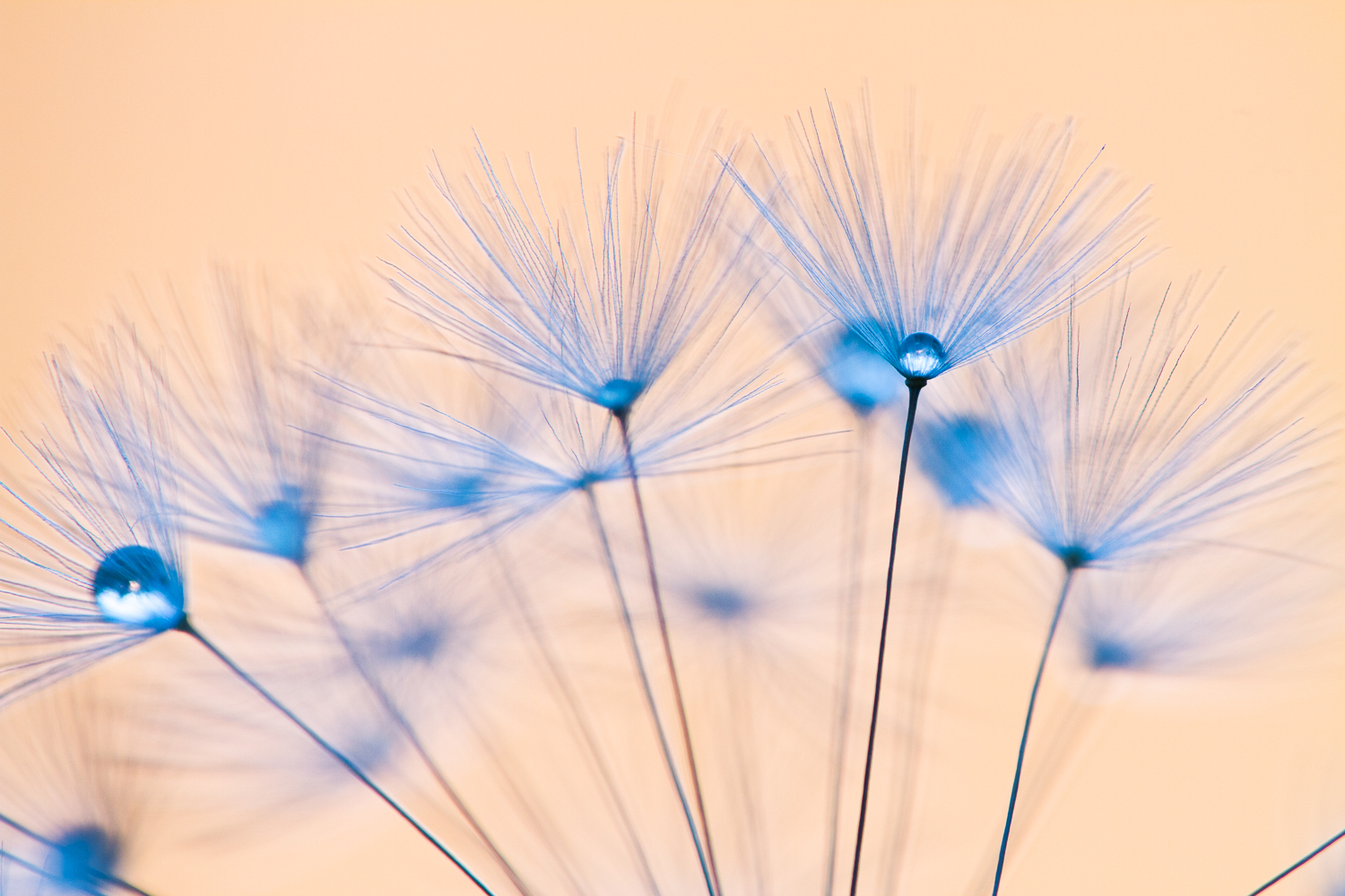 macro flower bokeh photography dandelion - Four Ways to Generate Stunning Bokeh in Your Images