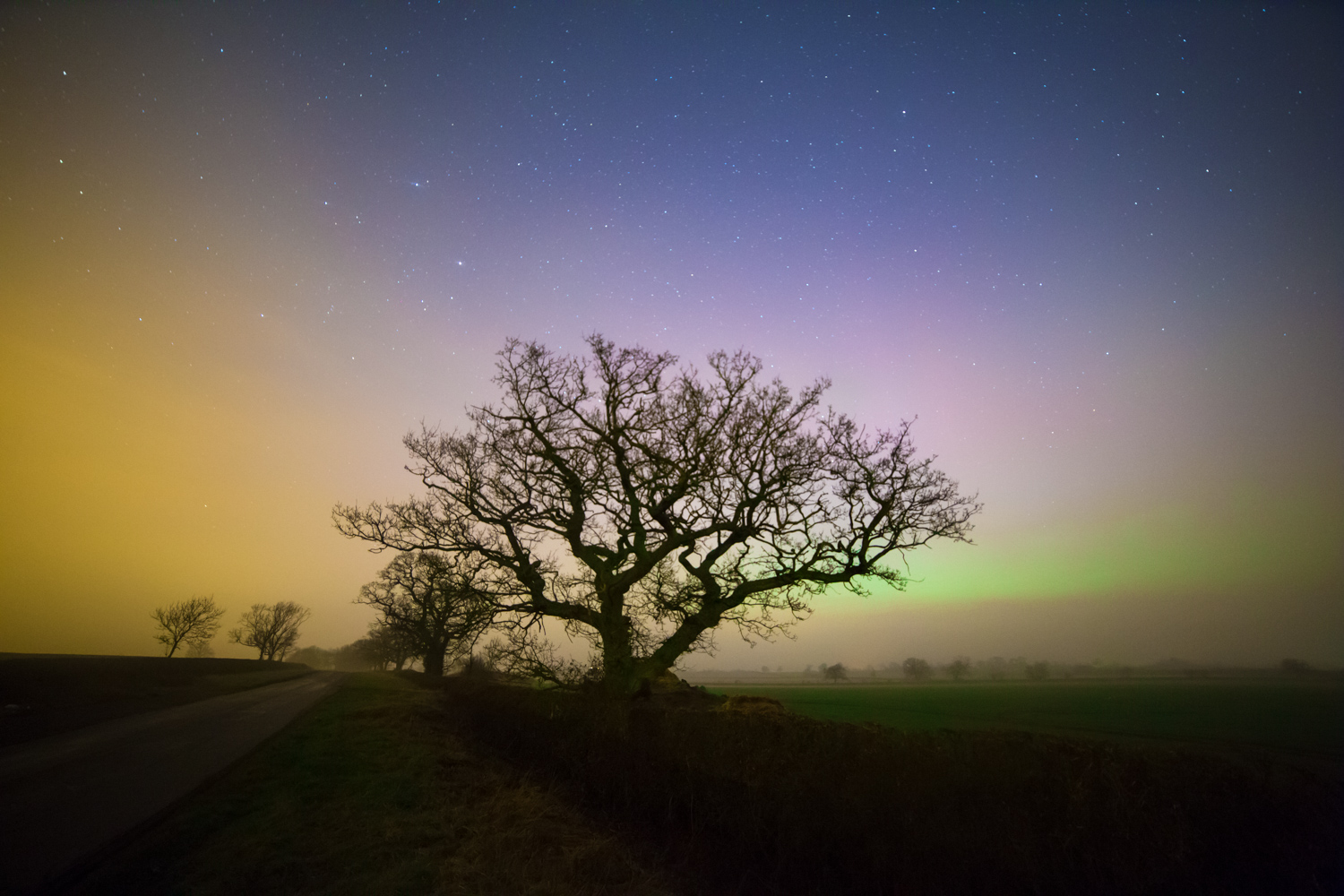 Nighttime photography - stars and tree at night