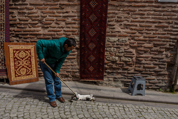 man sweeping a cat - 10 Things You Can Learn About Photography from Elliott Erwitt