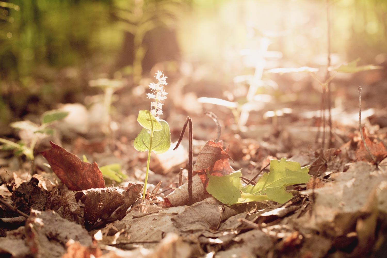 创造一个发光的外观 - 春天的花朵,温暖的色调