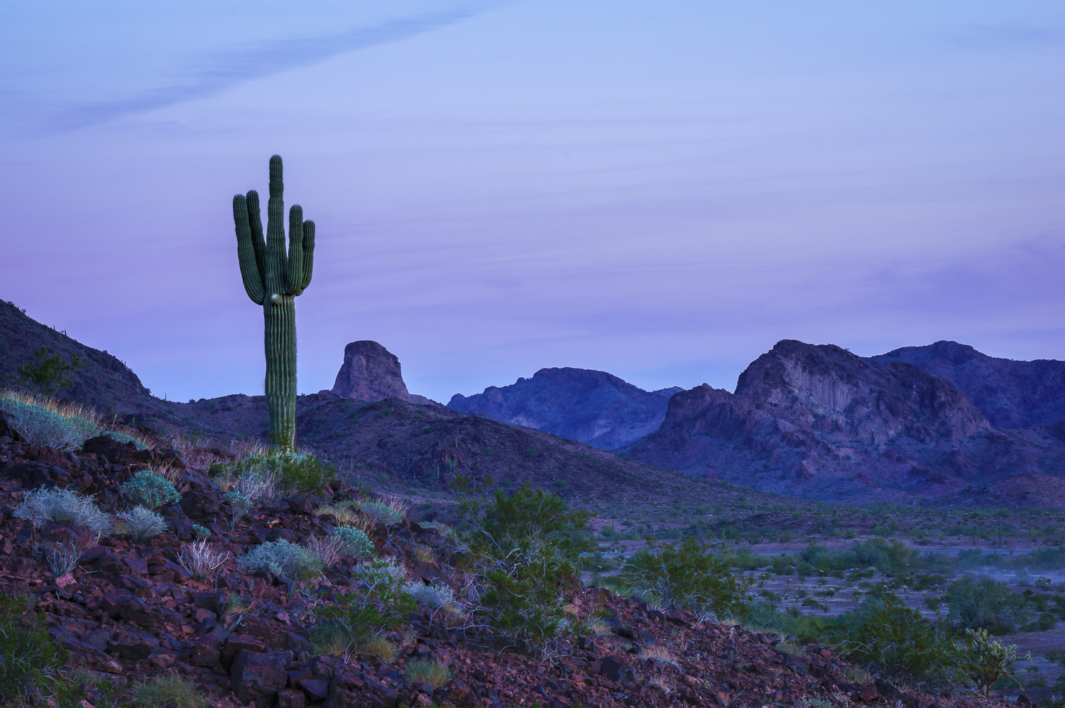 Saguaro Cactus by Anne McKinnell - Beginner's Guide to Natural Light in Landscape Photography