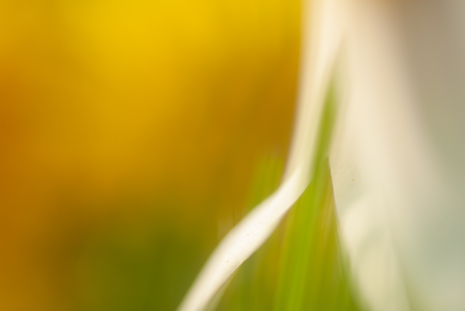 5 Things I Wish I'd Known Before Starting Nature Photography - flower extreme close up abstract