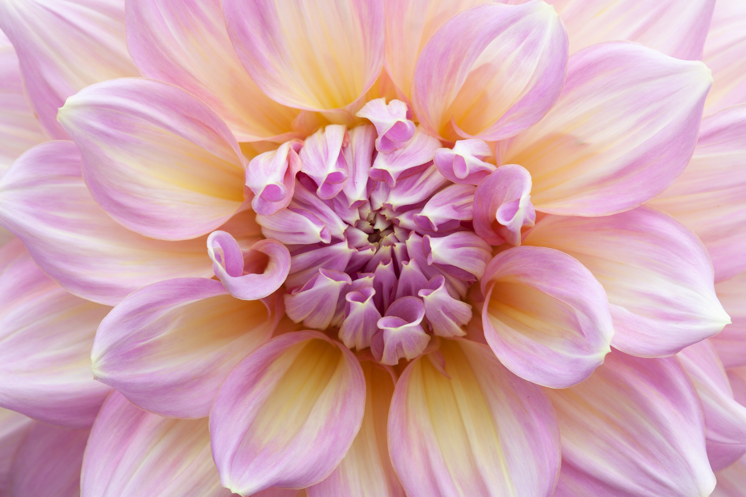 5 Things I Wish I'd Known Before Starting Nature Photography - flower macro pink