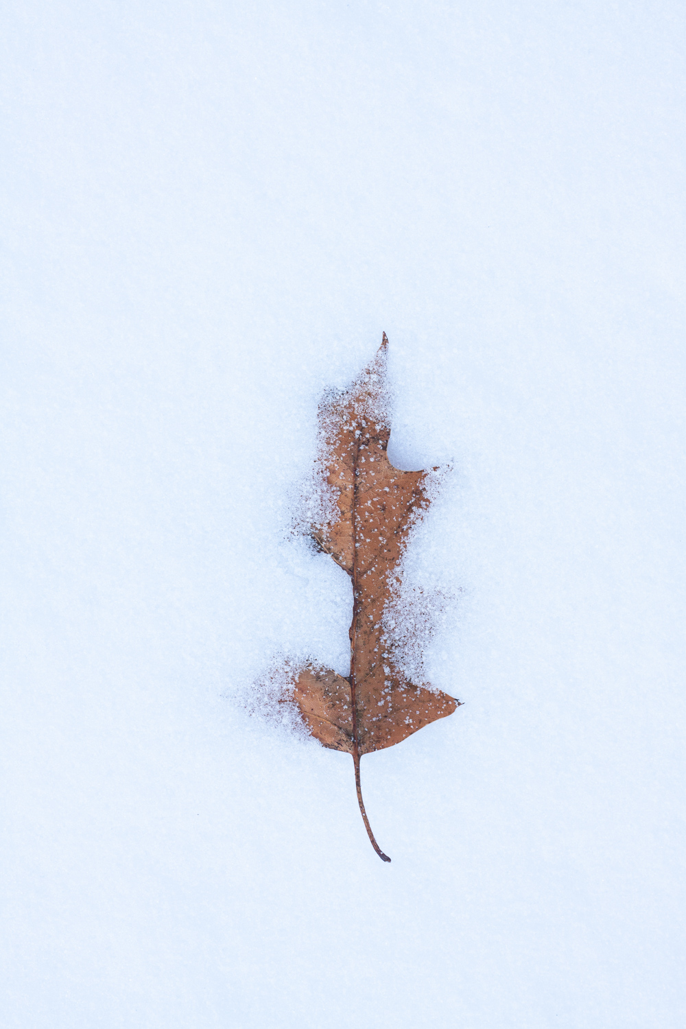 How to Take Extraordinary Photographs of Ordinary Subjects - leaf in the snow