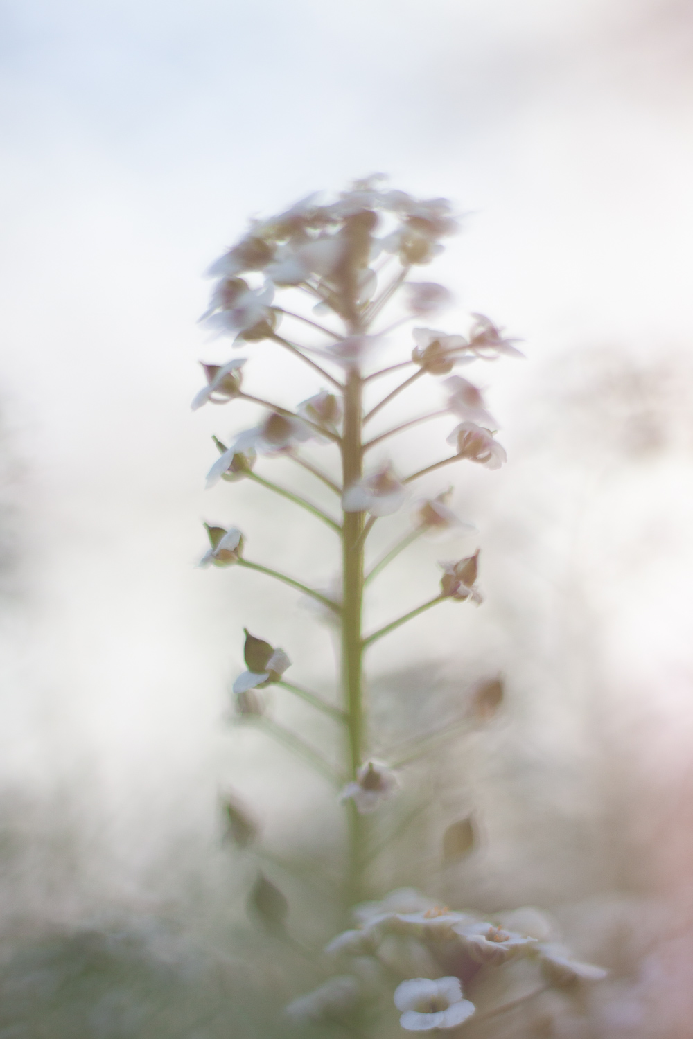interesting flower shape - How to Use Backlight to Create Incredible Images