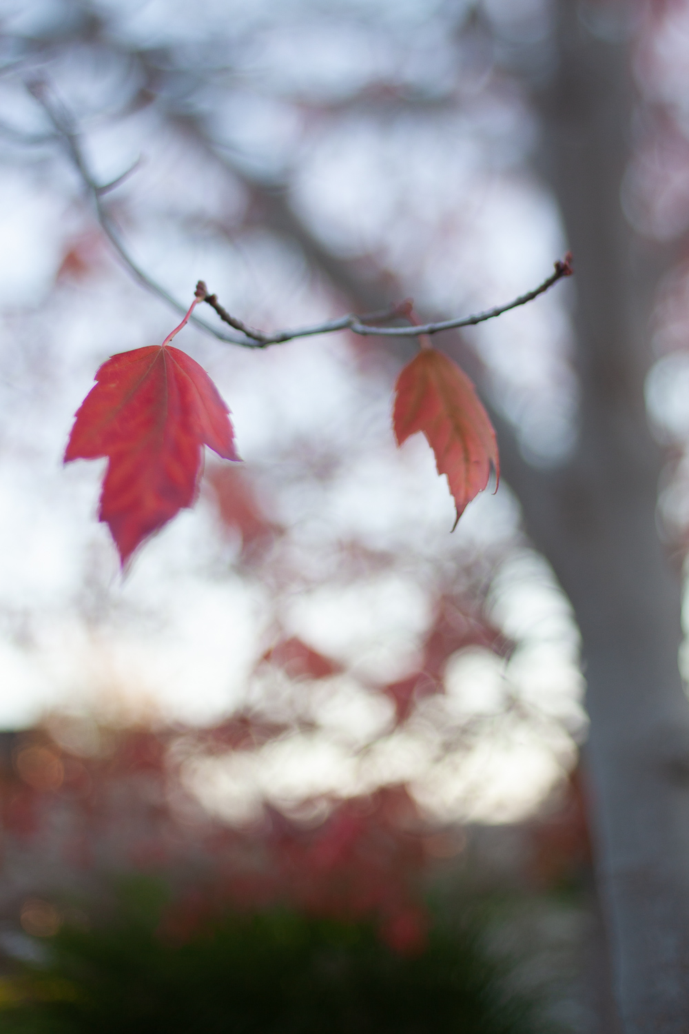 red leaf on a tree - 5 Ways to Make Extraordinary Photographs of Ordinary Subjects