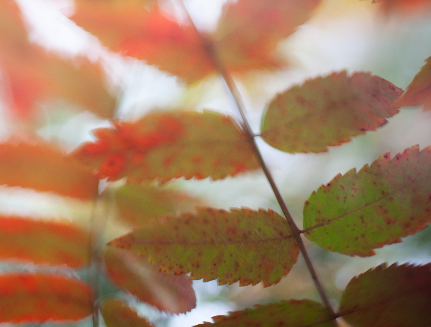 red leaves - 5 Ways to Make Extraordinary Photographs of Ordinary Subjects