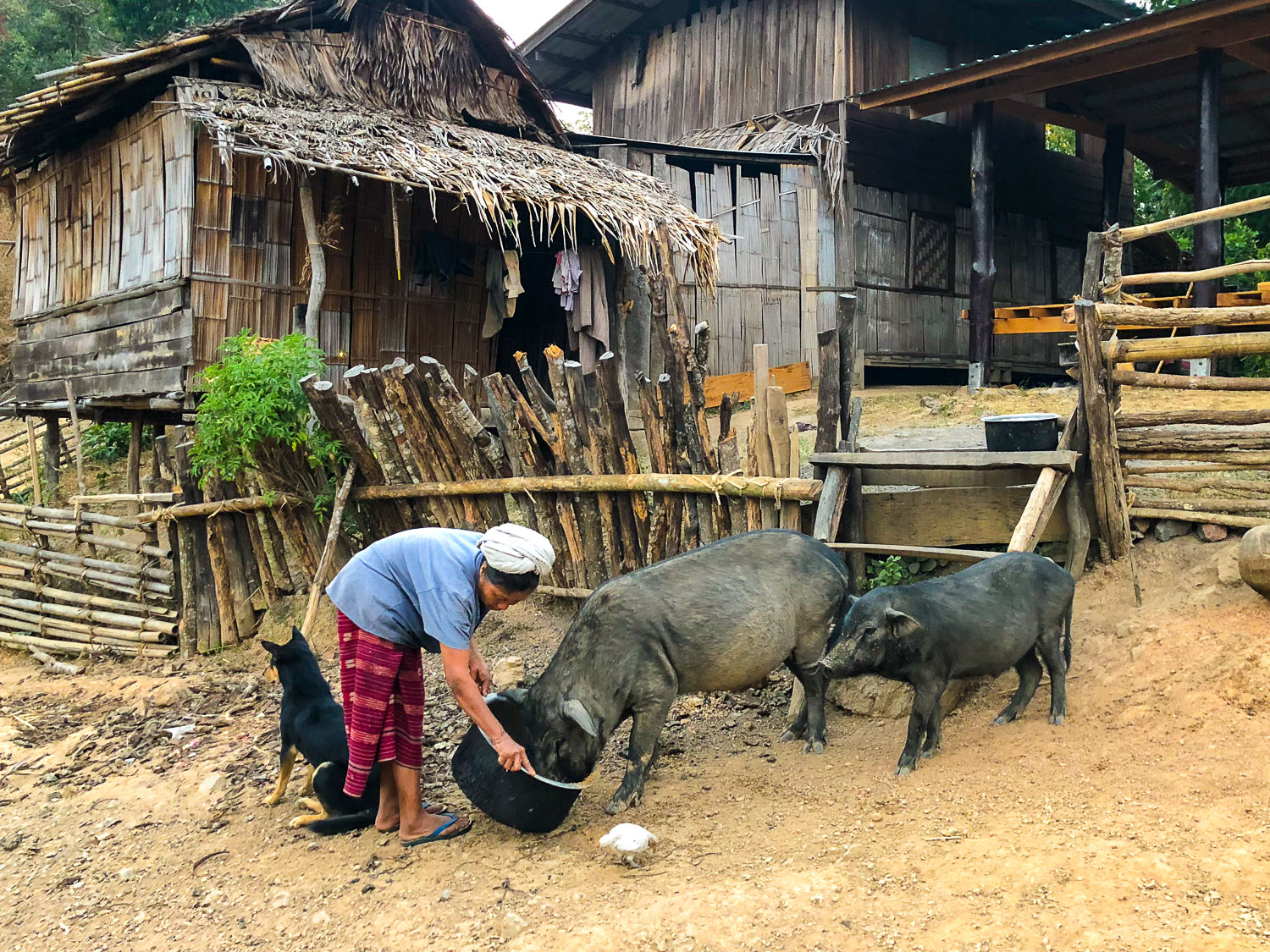 rural farm with pigs in Asia -  Travel Photography Mistakes