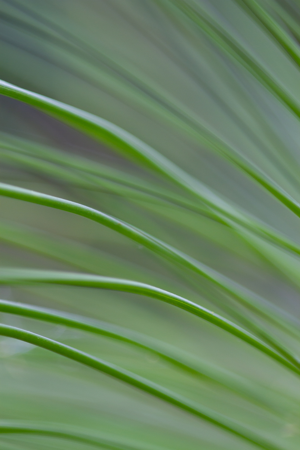 abstract of a leaf - 5 Ways to Make Extraordinary Photographs of Ordinary Subjects