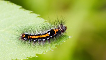 Insect Photography Tips – How to Capture Cool Critters